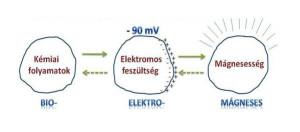 biomágneses rezonancia